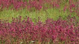 purple wildflowers HD Stock Video Footage
