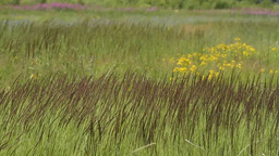 wildflowers and grass HD Stock Video Footage