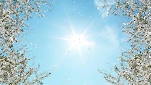 Springtime Animation