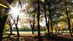 4K Autumn in Beautiful Park 1 Footage