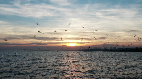 4K Seagulls In The Sunset Over Lake 1 stock footage