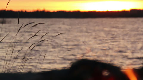 Reeds Behind Lakeside Campfire stock footage