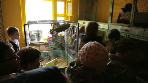 Animal shelter, room with cages Live Action