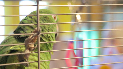 Animal shelter, parrot in a cage Live Action