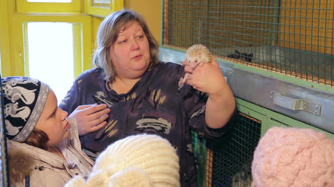 Animal shelter, guide shows the hedgehog Footage