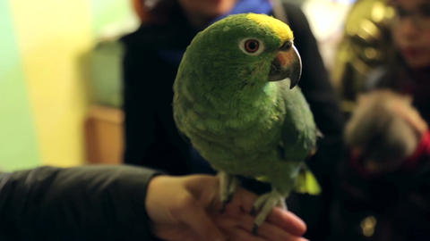 Animal shelter, large parrot on hand Live Action