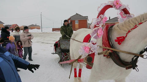 Riding in a sleigh, close-up of a horse Footage