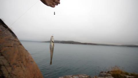 Haddock On A Rod On Sea Fishing In Scandinavia stock footage
