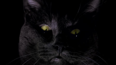 Black Cat With Yellow Eyes - Very Close Up - Loop Footage