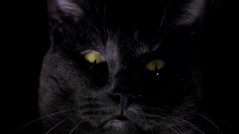 Spooky 13 - Halloween Bundle - I 0