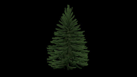 Xmas Tree - Green - Clean - Spin Loop - Alpha Chan Animation