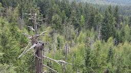 Dead trees. Co2 and So2 emission. Acid rains Footage