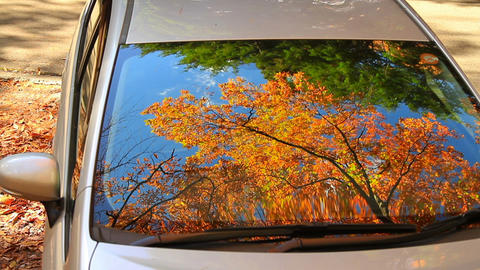 Autumn Leaves Reflected In The Window Of The Car stock footage