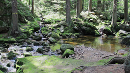 Mountain brook with a mossy rocks in the forest Footage