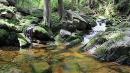 Wild Forest With A Pure Water In A Brook stock footage