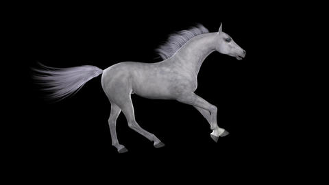 Horse Gallop - White - Side - Loop - Alpha Animation