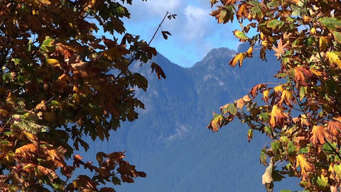 Autumn Maples & Mountains Footage