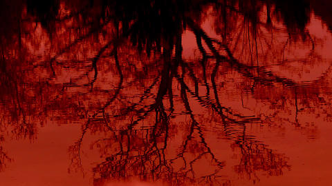 Bloody Pond - Tree Reflection stock footage