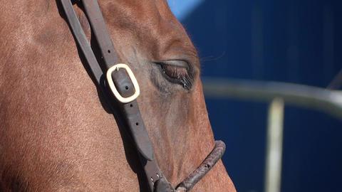 Horse Racing - 06 - Close Head - Brown Footage