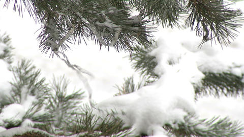 Pine Branch With Snow And Christmas Ribbon stock footage
