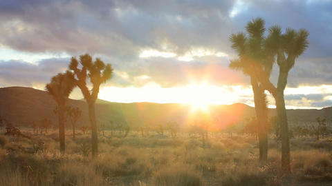 Joshua Tree, time lapse Stock Video Footage