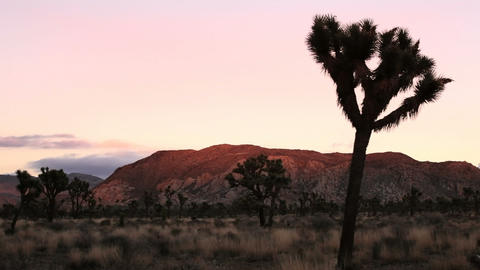 Joshua Tree, time lapse Footage