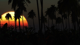 Sunrise in Paradise 01 Stock Video Footage