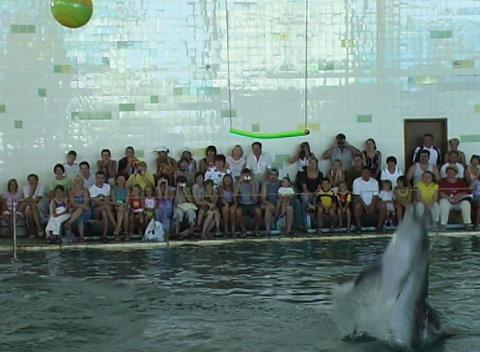 Dolphin 0