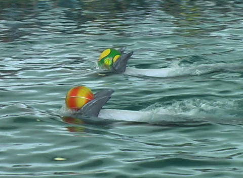 dolphin with ball Footage