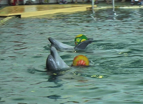dolphin with ball Stock Video Footage