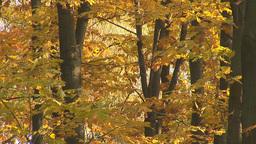 autumn 12 Stock Video Footage