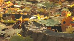 autumn 14 Stock Video Footage