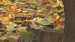 autumn 14 Stock Video Footage