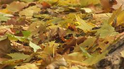 autumn 18 Stock Video Footage
