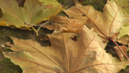 autumn 18 Footage