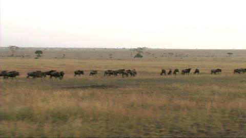 African Wildlife 4 (SD) 0