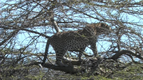 African Wildlife 3 (SD)