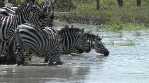 African Wildlife 3 (SD) 0