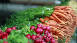 Fresh Vegetables In Green Market Carrots And Radish stock footage