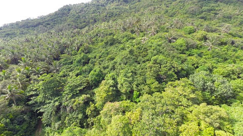 Aerial shot of the jungle Footage