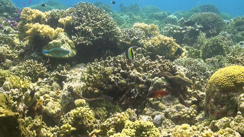Octopus Couple On A Coral Reef stock footage