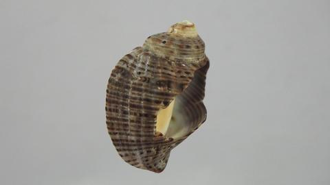 Seashell. 4K Footage