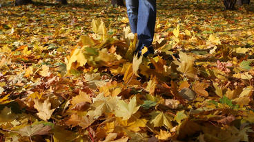 Man In Jeans Goes On The Autumn Fallen-down Maple  stock footage