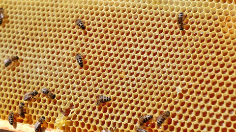 Frame with bee honeycombs filled with honey Footage