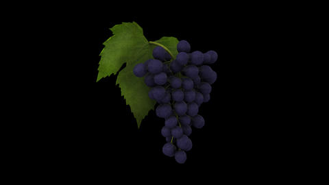 Grapes Animation CG動画素材