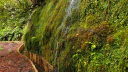 Levada Ribeiro Frio – Portela on Madeira, Portug Footage