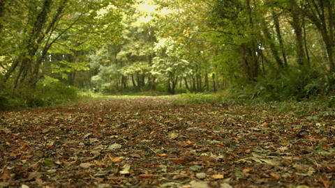 Autumn Leaves On The Ground stock footage