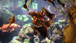 Motion of fish underwater inside fishtank Live Action