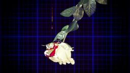 EKG heartbeat white rose blood drops Footage