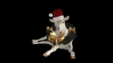 Holiday Sheep - Laying & Shaking Animation